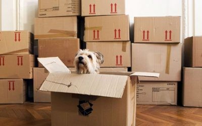Why Hire Professional Packing Services in Hampstead NH?